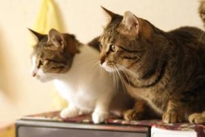 2匹の猫の画像